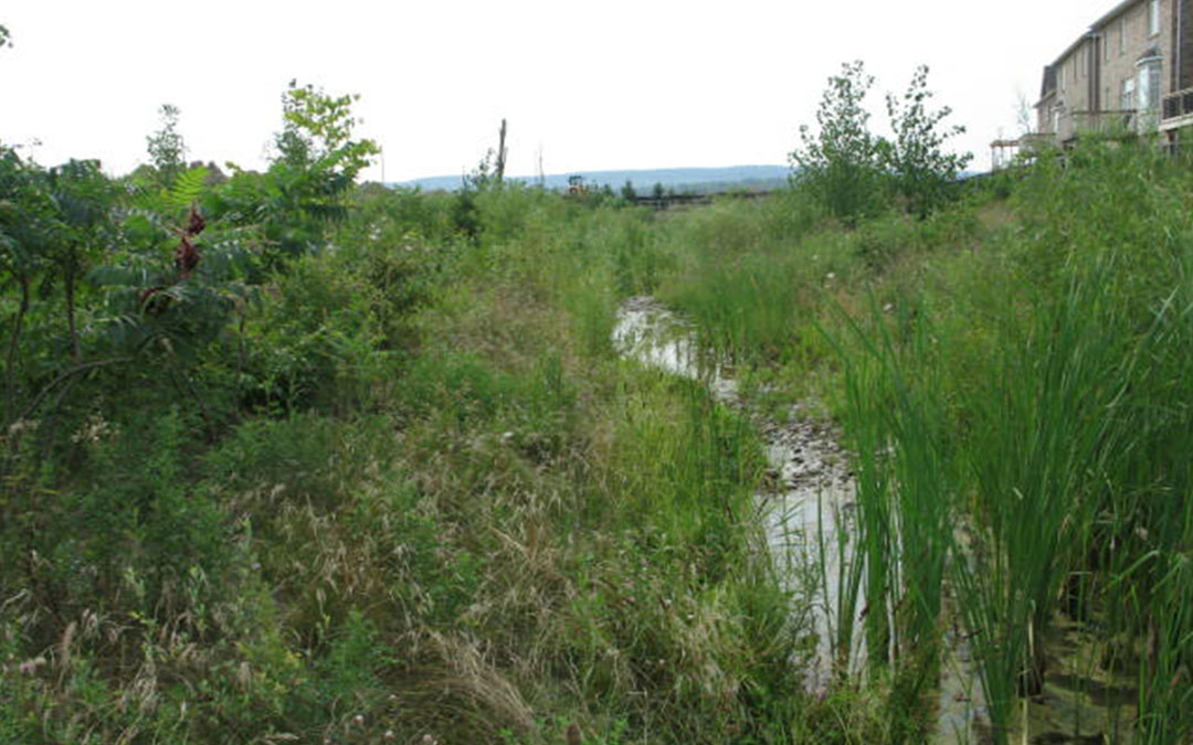 West Sheldon Creek Realignment