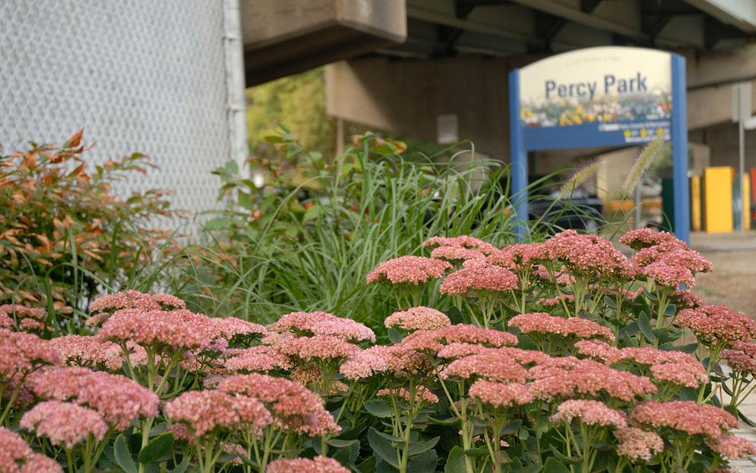 Percy Street Park